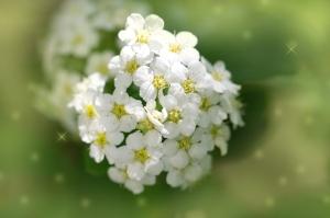 beautiful white flowers in nature. macro